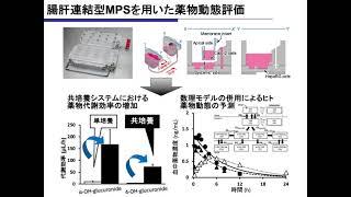 腸肝連結型MPSを用いた薬物動態評価
