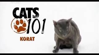 Корат 101kote.ru Korat 101cats