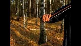 """Скрипка в осеннем лесу....""""""""""""видео сергея лаврентьева"""