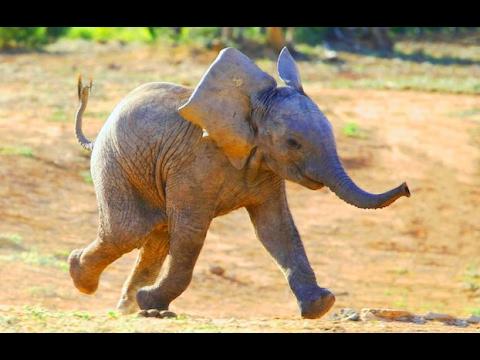 Смешные и милые слоны и слонята.