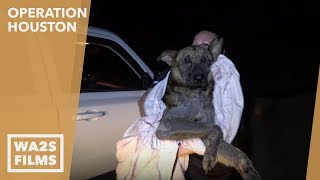 Gambar cover Stray Mangy German Shepherd Saved By Forgotten Dogs Rescue - Hope For Dogs | My DoDo