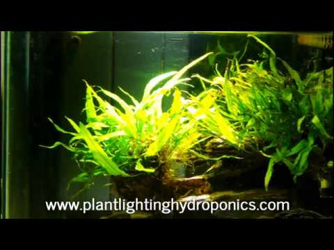 Plant Lighting Hydroponics   A Leading Provider Of Hydroponic Systems