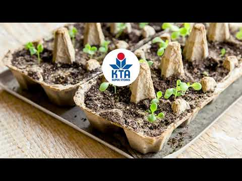 Plant Starters with Upcycled Egg Cartons