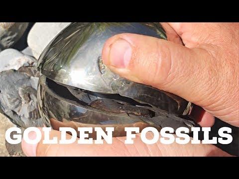 Golden Fossils: Ep 1