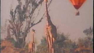 Roger Whittaker Kenyan safari Part 5