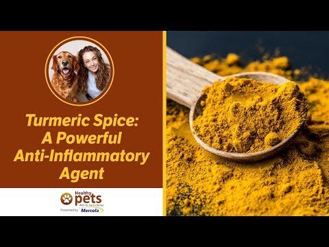 Dr. Karen Becker Discusses Turmeric