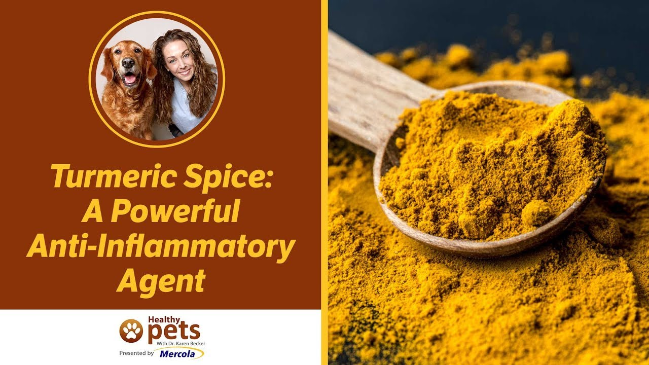 Are There Side Effects of Turmeric for Dogs? | Keep the Tail