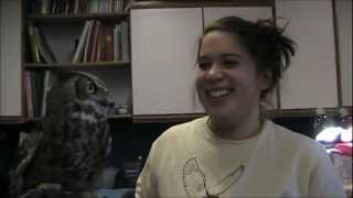 Icarus, Great Horned Owl Trains Jackie   Nature's Nursery