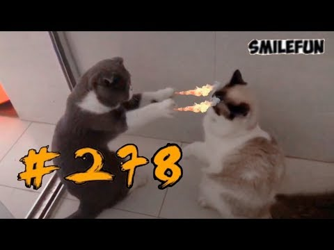 2019        2019 Funny Cats