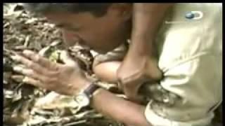 Crudo y Sin Censura: Anaconda, Corrida Caballo, Eagle. - 1 / 4