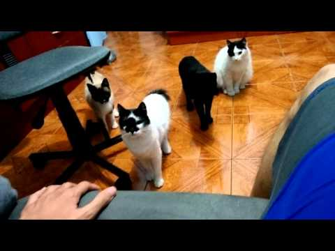 Cats curious about the sound in sofa