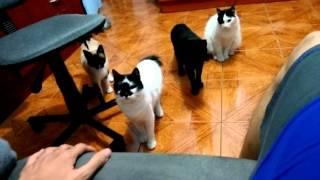 だるまさんは転んでない?何かにつられてロボティックな動きで近づいてくる4匹の猫