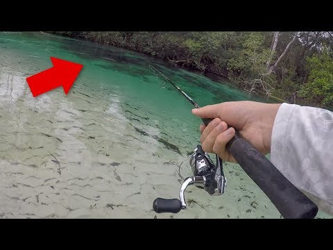 That Was HUGE! Fishing ULTRA Clear Natural Spring!!