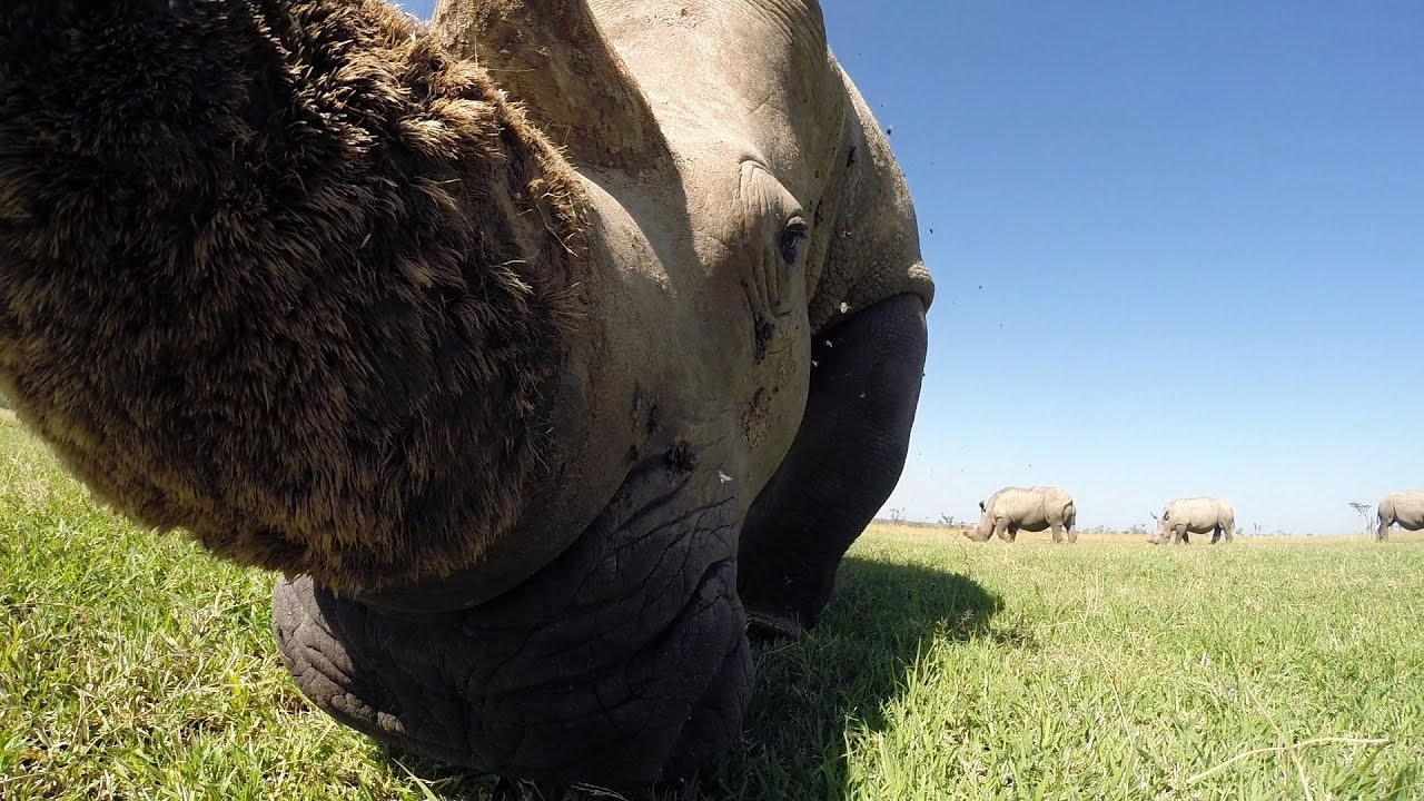 GoPro Awards: Looking for Wild Animals with an RC Car in Africa