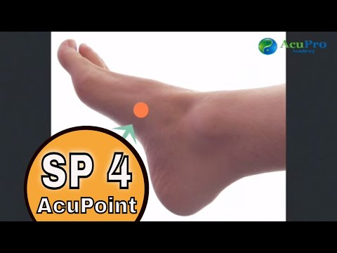 All About the TCM Spleen | AcuPro Academy | Acupuncture