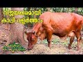 Make Huge profit from Cow Farming | Haritham Sundharam EP 234 | KaumudyTV