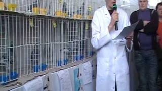 www.porumbel.net - Licitatie Carlos Marquez Prats (3)