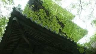モミジの名所として知られる西山興隆寺の一部分を写真で紹介しています...