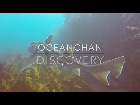 Stingrays and Sharks | Freshwater Beach | Oceanchan