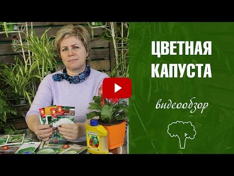 Брокколи капуста Рецепты, блюда Суп пюре из брокколи Фото