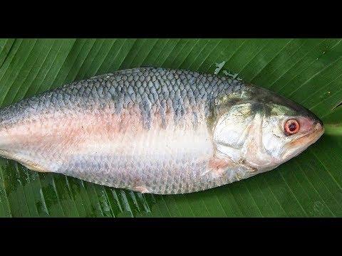 #NeverSeenBefore | Costliest fish in the World | Ilish Fish  | Pulasa fish | Elish Fish
