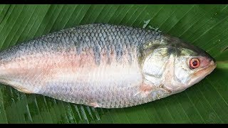 #NeverSeenBefore | Costliest fish in the World | Ilish Fish  | Pulasa fish | Elish Fish