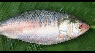 #NeverSeenBefore   Costliest fish in the World   Ilish Fish    Pulasa fish   Elish Fish