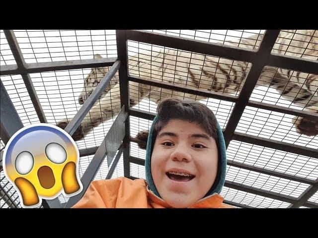 Un Tigre blanco paso arriba mio!! | Safari Rancagua