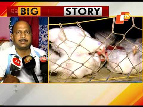 Bird Flu Confirmed In Paradip