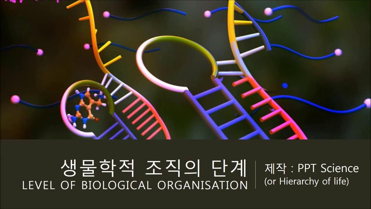 [외전4]생물학적 조직의 단계