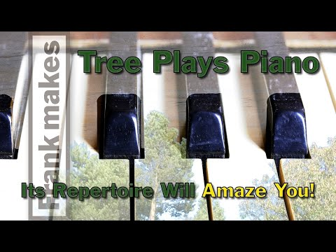 Tree Plays Piano.  Its Repertoire Will Amaze You!