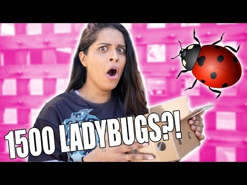 Someone Sent Me 1500 Ladybugs From Amazon