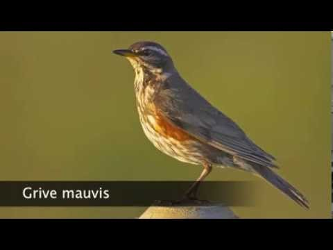 chant grive musicienne mp3