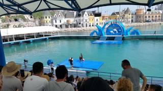 Шоу дельфинов Vinpearl Land