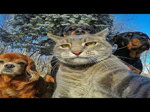 Funny Cats and Dogs Compilation #13