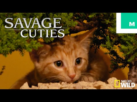 Puppies & Kittens Recreate 'Savage Kingdom: Uprising' Episode 4