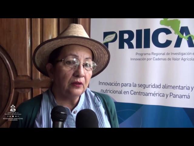 Competitividad de Productores Hondureños de Aguacate Depende de la Certificación de