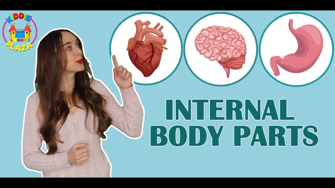 Internal Parts Of The Body For Kids Learn Human Body Part Youtube