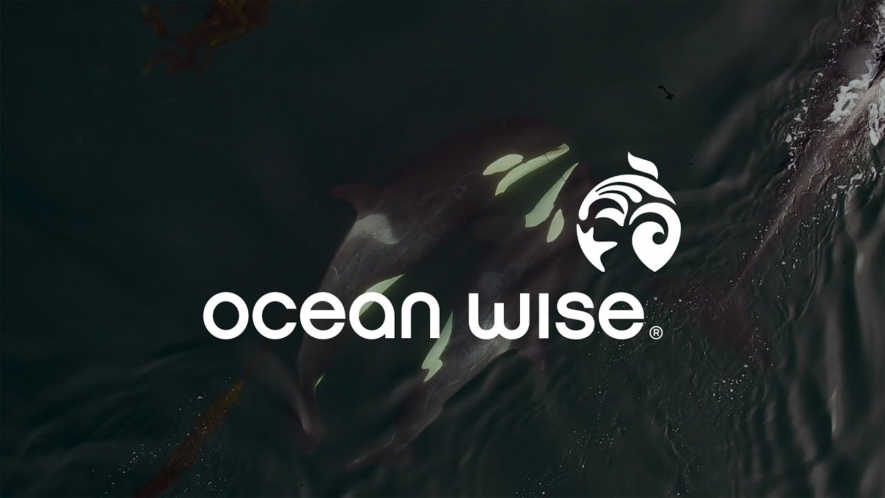 We use cookies to let us know when you visit soundcloud, to understand how you interact with us, to enrich and personalize your user experience, to enable social media functionality and to. What Is Ocean Wise Youtube
