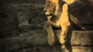 Konga Music Agency - Spot Zoo de Barcelona