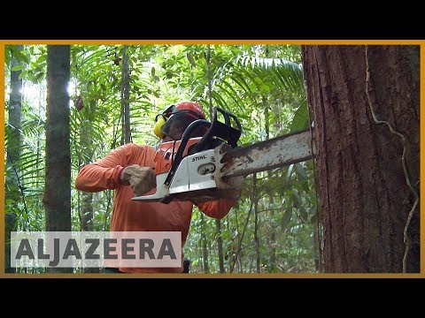 🇧🇷Brazil's president-elect threatens Amazon rainforest | Al Jazeera English