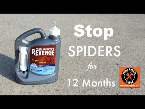 Get Rid Of Spiders With Miss Muffets Revenge    By Home Repair Tutor    YouTube
