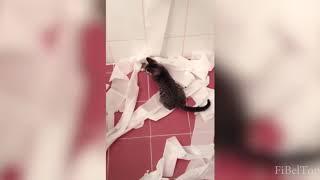 Приколы с кошками и котами 2019. Подборка смешных и интересных видео с котиками.ЛУЧШЕЕ.