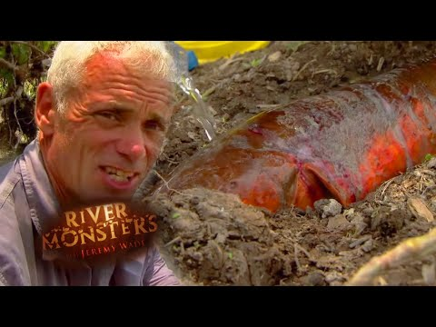 Catching A Giant Electric Eel With Rubber Gloves | EEL | River Monsters