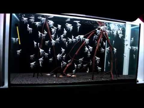 Aquarium - Black N' White