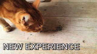 Cody's reaction to catnip