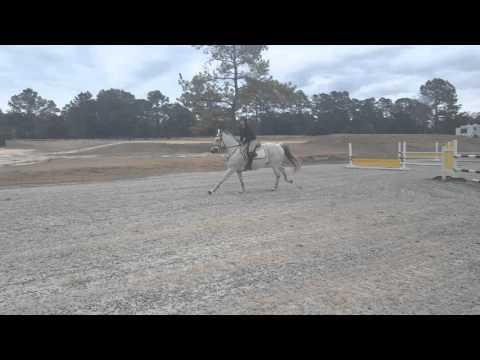 grey horse show jumper