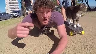 Skateboarding Cats  @DAXON