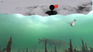Щука как БРЕВНО Рыбалка на жерлицы Поиск рыбы Эхолот Deeper Chirp