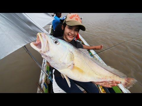 River  Boeseman croaker fishing ปราบพยศปลาม้าที่บางประกง by fishingEZ
